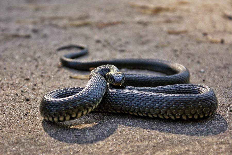 Giải thích chung về giấc mơ thấy rắn