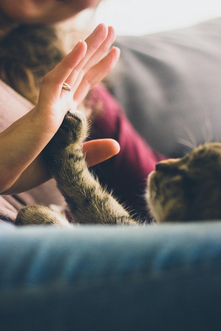 Mơ thấy mèo đánh con gì?