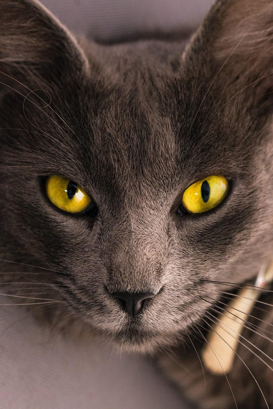 Mơ thấy mèo giận giữ