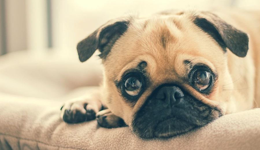 Mơ thấy chú chó bị giết thịt
