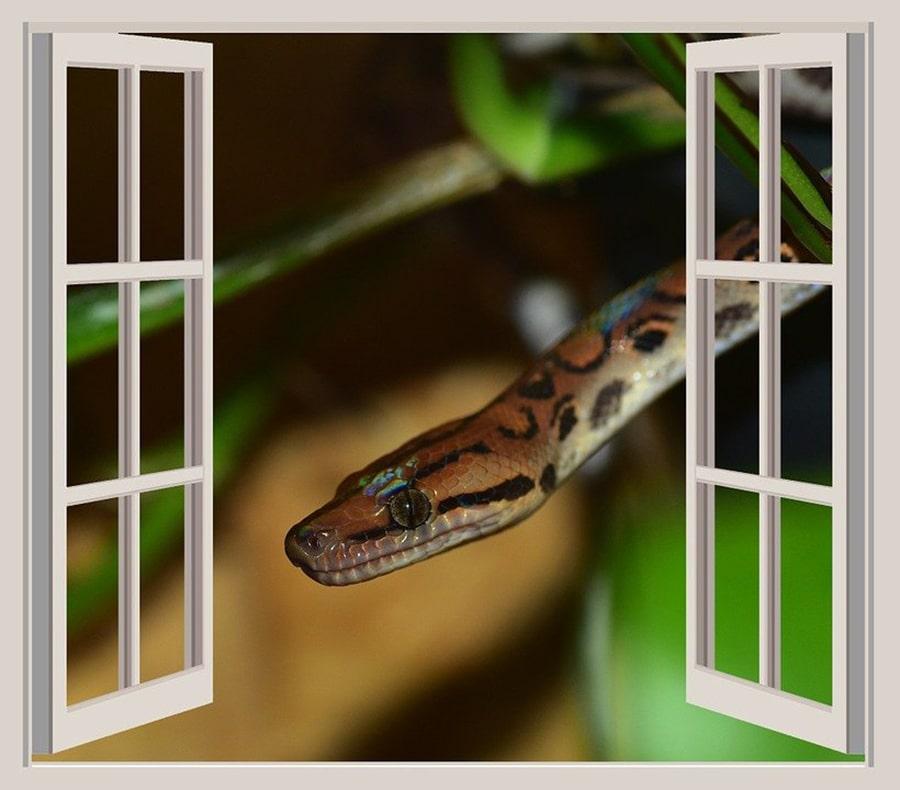 Mơ thấy rắn bò vào nhà