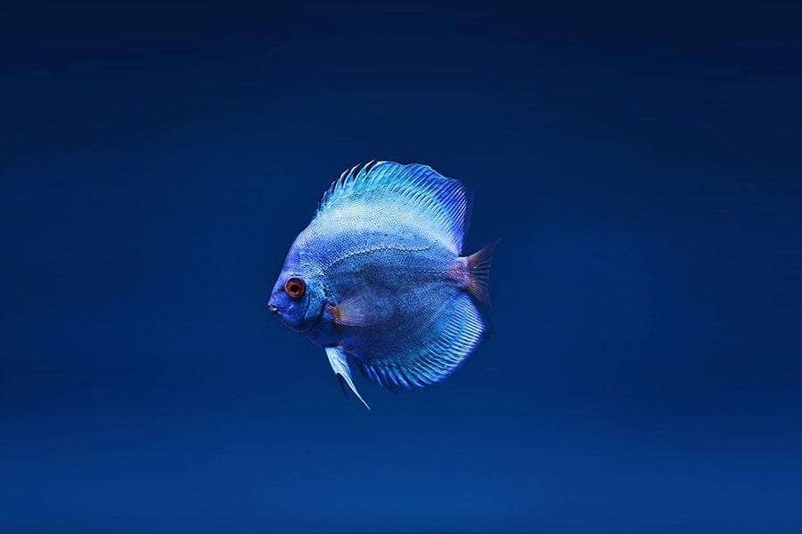 Mơ thấy con cá nhỏ