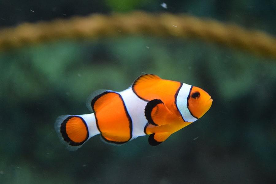 Biểu tượng của loài cá trong tâm linh.