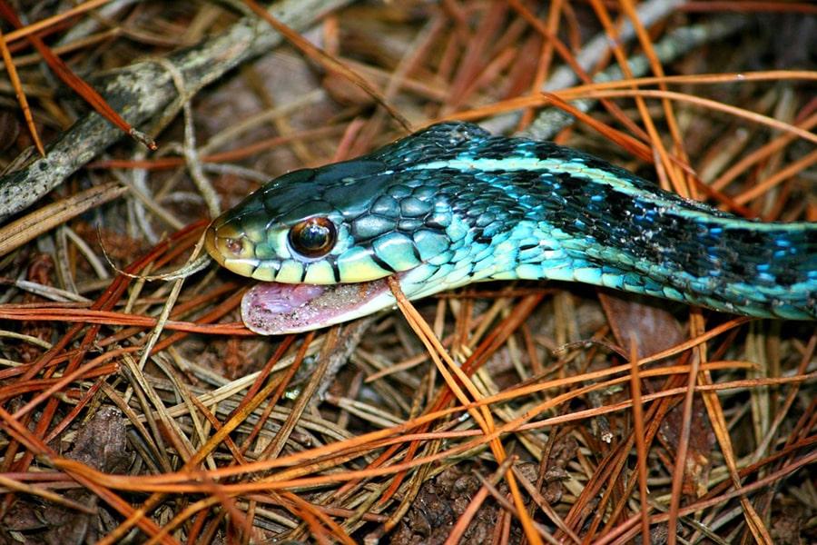 Mơ thấy rắn lục cắn bạn