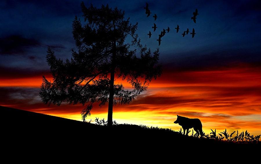 Mơ thấy chó chăn cừu