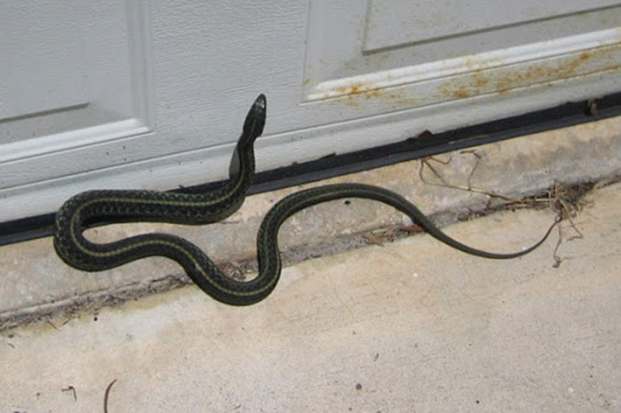 Mơ thấy rắn bò vào nhà đánh con gì