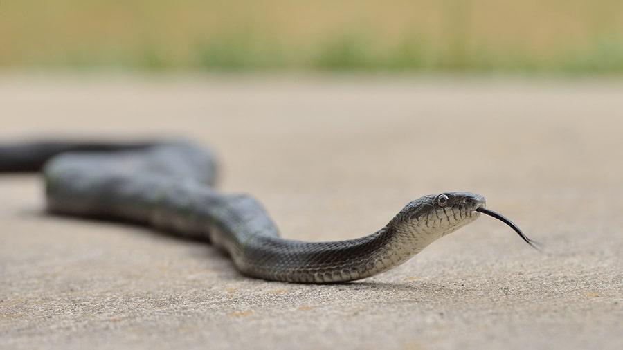 Mơ thấy rắn chạy khỏi nhà