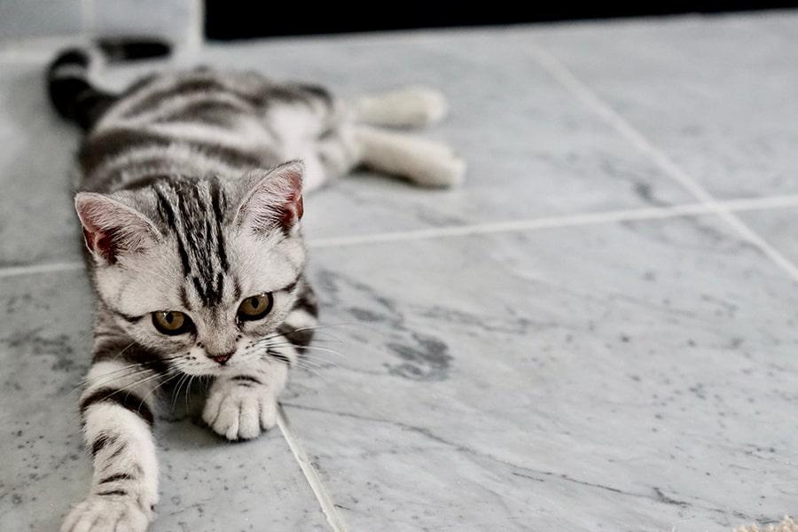Mơ thấy mèo chết